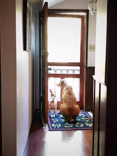dogs-waiting-front-door