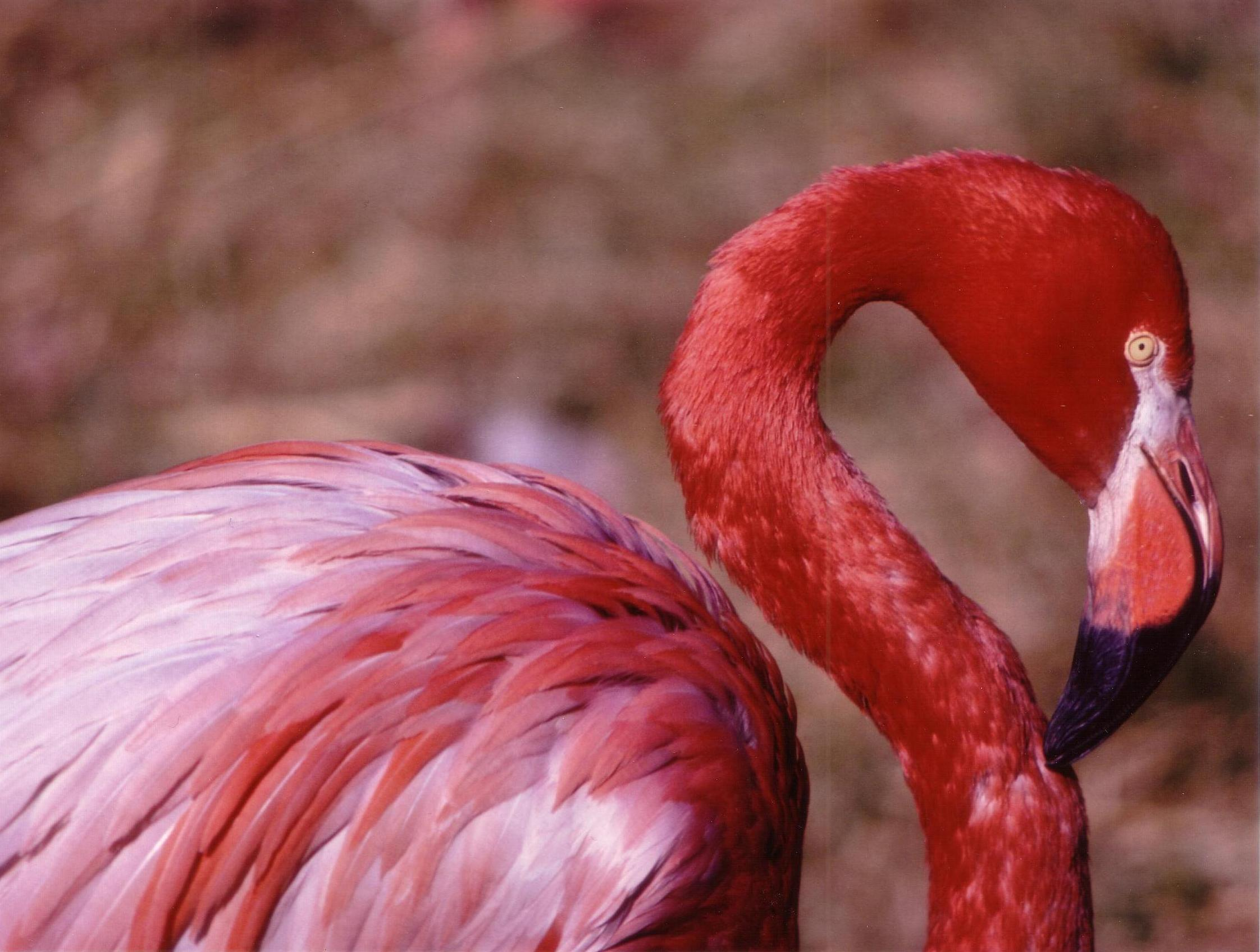 Photo courtesy of Smithsonian's National Zoological Park