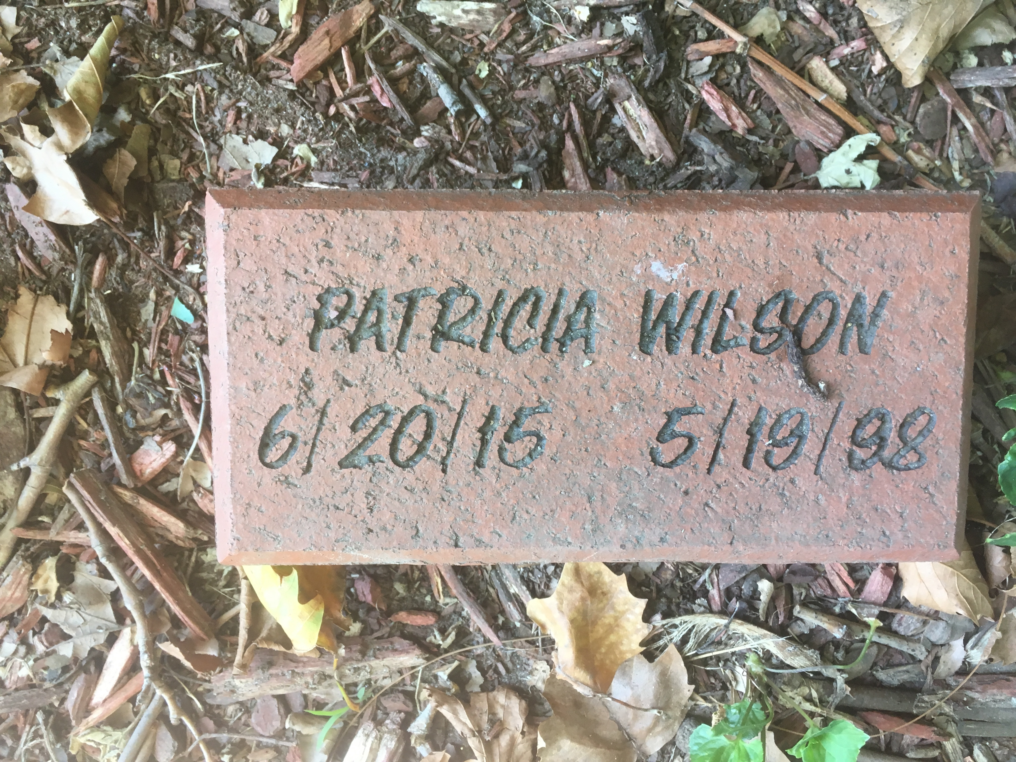 Read more about the article Patricia Wilson