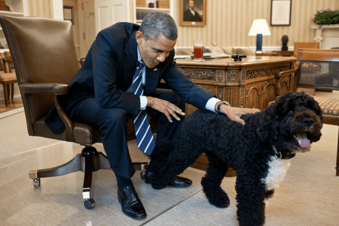 President Barack Obama pets Bo, in the Oval Office, June 21, 2012.