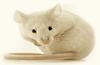 andrew-johnson-mice