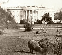 Woodrow Wilson Biography - Presidential Pet Museum 1920 White House