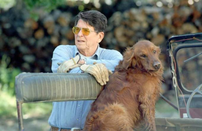 Ronald Reagan and golden retriever dog Victory at the ranch, 1984.