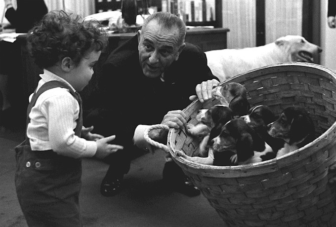 It's impossible to say which one of these puppies is Freckles, but one of them is. The puppies were sired by President Johnson's beagle Him. Courtesy LBJ Library. Jan. 5, 1966.