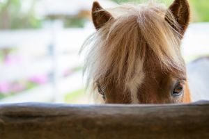 """Hold Your Horses: Privilege Protects Plaintiff–Lawyer's """"Cozy Agreement"""" with Plaintiff's Treating Physician"""
