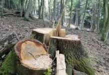 stabla