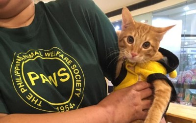 No pause for PAWS: The rescued animals adoption drive continues amid the pandemic