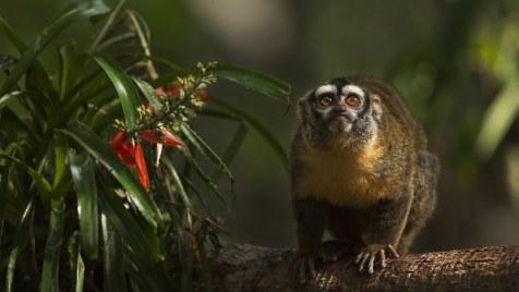 Amazonia-Abenteuer im Regenwald (Doku, Regie: Thierry Ragobert, 16-05.)