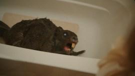 Zombiber (Horrorkomödie, Regie: Jordan Rubin, 06.11.)