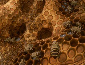 Trailer: Bee Simulator