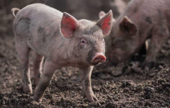 o que é o bem-estar animal