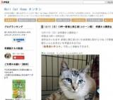 1564409 thum - ふれあえる保護ネコ譲渡会