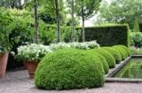 1597371 thum 1 - イギリスの庭に学び日本の植栽で作る デザイン性の高い緑のガーデン | ハウスクエア横浜