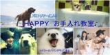 1598327 thum - 愛犬のお手入れ~博多~トリマー@パパンがやってくる