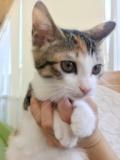1600603 thum 1 - 8月11日(土) 猫の譲渡会 名古屋市西区 みなと猫の会主催