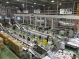 1600615 thum 1 - リサイクル工場見学と巨峰収穫体験