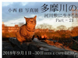 1604284 thum 1 - 小西修写真展「多摩川の猫」