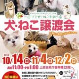 1605941 thum - 犬・ねこ譲渡会