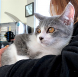 1607903 thum - 12月16日(日) 猫の譲渡会 名古屋市港区 社会福祉法人中部盲導犬協会 みなと猫の会 主催