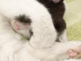 1608111 thum 1 - もっと猫を助けたい!保護猫カフェ存続し殺処分0から収容数0へ