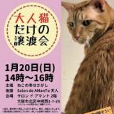 1610378 thum 1 - 大人猫だけの譲渡会
