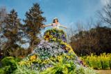 1614939 thum 1 - フラワードレスの装飾花壇プレオープン
