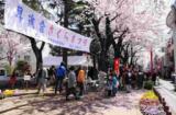 1616215 thum 1 - 祖師谷昇進会桜まつり
