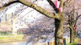 1616339 thum 1 - フォトコン なごや もっともゆるいフォトコンテスト @荒子川公園 昼の部