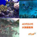 1632023 thum - 40代50代 葛西臨海水族館出会い巡り散策