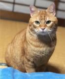 1632658 thum 1 - 1月26日(日) 猫の譲渡会 名古屋市守山区 動物医療センターもりやま犬と猫の病院 みなと猫の会 主催