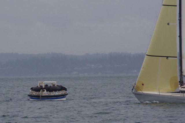 STYC Iceberg Race