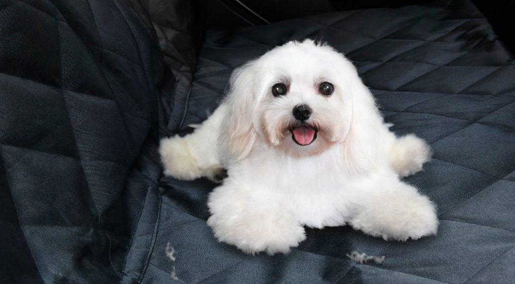 aspirar-pelo-perro-con-aspirador-sofa