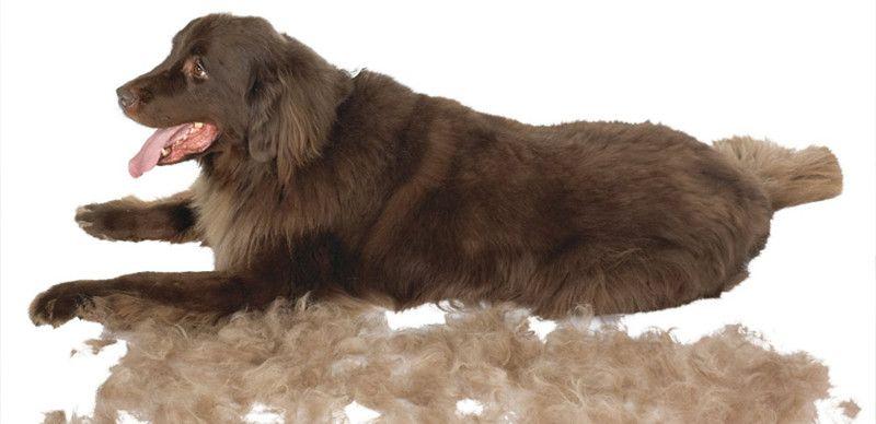 perro de pelo largo