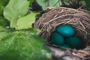 nest-843231_1280