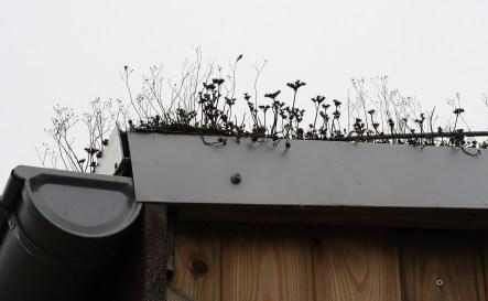 To też wyraz ekologiczności dachy obiektów pokryte są roślinami zdolnymi absorbować deszczówkę