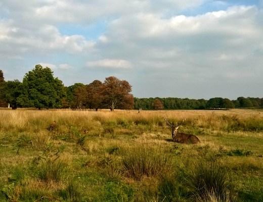 Deer of Richmond Park
