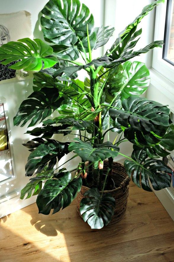 Gilbert Monsterea Plant