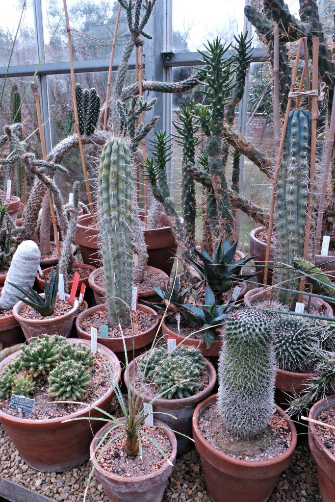 Picture of the catus in the greenhouse.  48 hours in clifton itinerary.