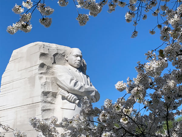 DC's MLK monument framed by cherry blossoms
