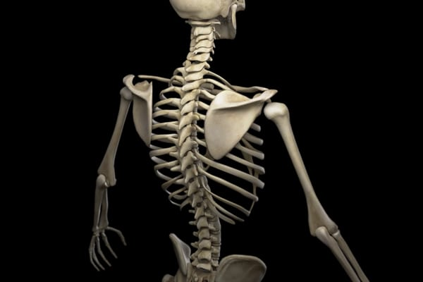 muscle mass percentage bones