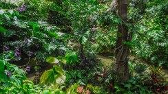 The atrium of the rainforest