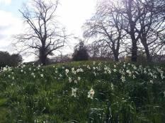 Kensington Garden 9