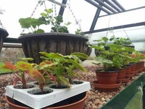 green house 13