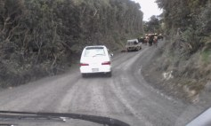 Driving out behind the cattle