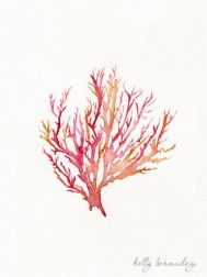 Coral Illustration