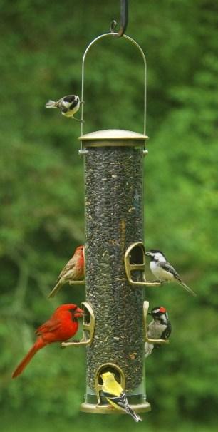 Post Box Bird Feeder