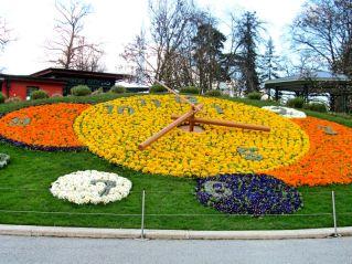 The flower clock