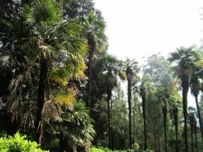 At the botanical garden