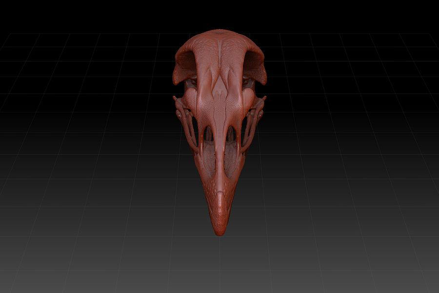 poulet gallus domesticus modele 3d