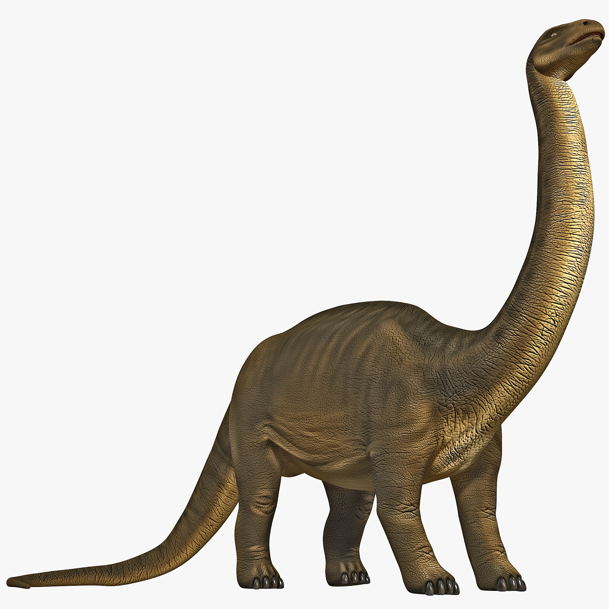 brontosaurus related keywords amp suggestions brontosaurus long tail
